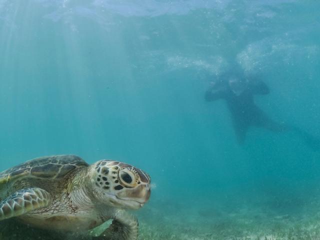 Snorkelling at the Miyako Island, Japan